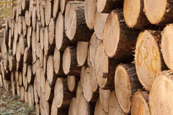 Baumpflege Kiel Torp